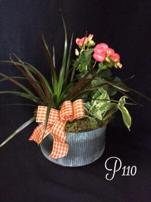 Plant arrangements for delivery in central Oregon, Bend, Redmond, Sisters, Tumalo